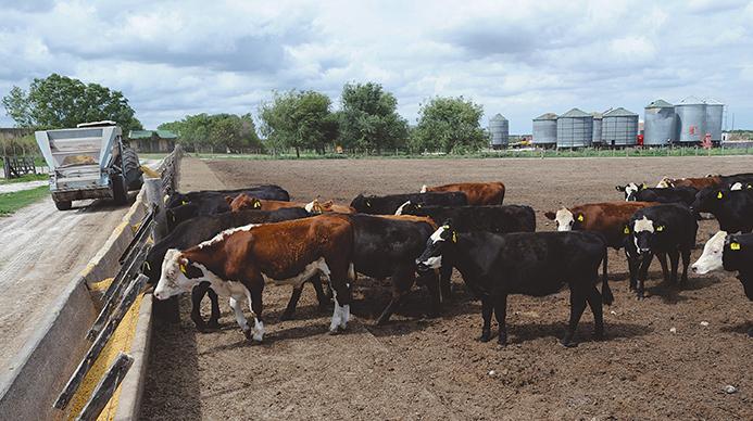 /tomada de http://noticiasuy.com
